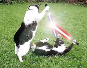 More cats, this time with lightsabers